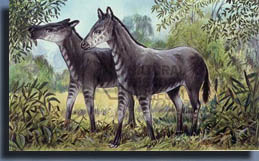 Анхитерий (Anchitherium)