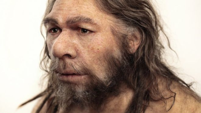 09011654-neanderthal model-spl